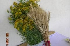 erbe propiziatorie: iperico e grano