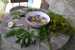 erbe di san Giovanni pronte per accogliere la guazza